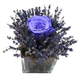 Trandafir nemuritor mov