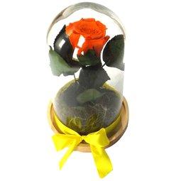 Dragoste si trandafiri nemuritori - portocaliu