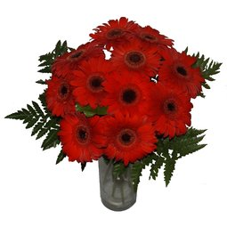 Gherbere rosii minunate (11)