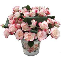 Flori de dragoste