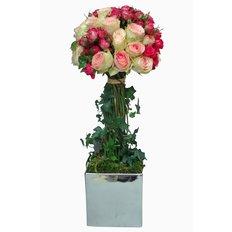 Albero di Rose Rosa