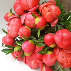 Coral Peony | Send Flowers To Milan | FlorPassion
