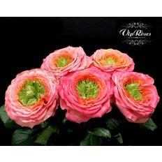 Rose Inglesi Houdini | Vip Roses | Consegna Fiori Milano