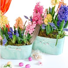 Hyacinths and Easter Egg