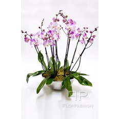 Luxury Light Pink Orchids
