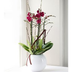 Send Pink Orchid to Milan | Online Plants Delivery