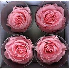 Pastel Pink Preserved Premium Roses, 4pcs