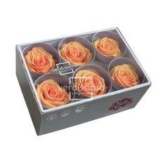 Peach Preserved Roses, 6pcs