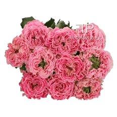 Rose Inglesi da Vip Roses | Collezione Lusso FlorPassion