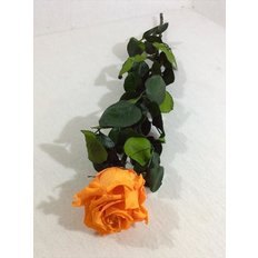 Preserved Rose, Orange