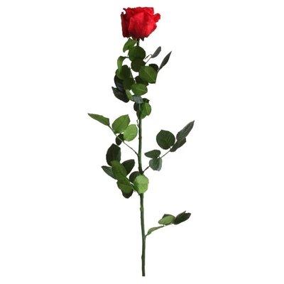 Preserved Rose, Red
