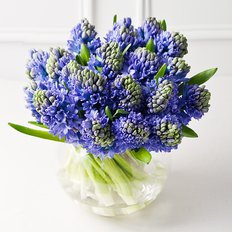 Blue Hyacinths Bouquet Delivery | Local Florist Milan