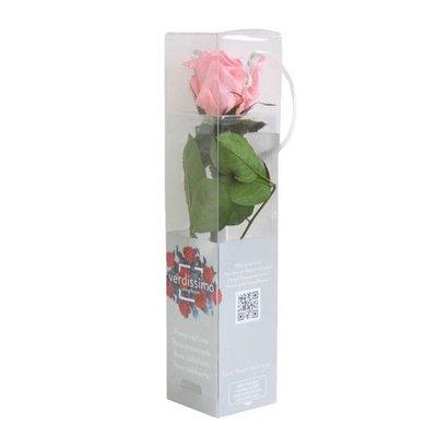 Rosa Amorosa Mini Stabilizzata Rosa Pastelo