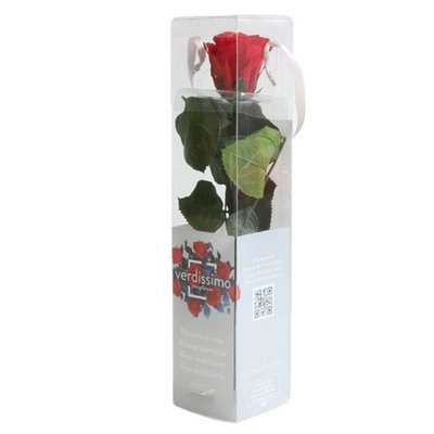 Rosa Amorosa Mini Stabilizzata Rosso