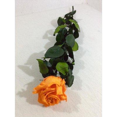 Rosa Amorosa Stabilizzata Arancio