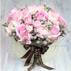 Sweet Xmas Rose